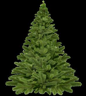 Christmas tree undecorated